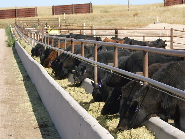 An export-promising meat complex is being built in the East of Kazakhstan